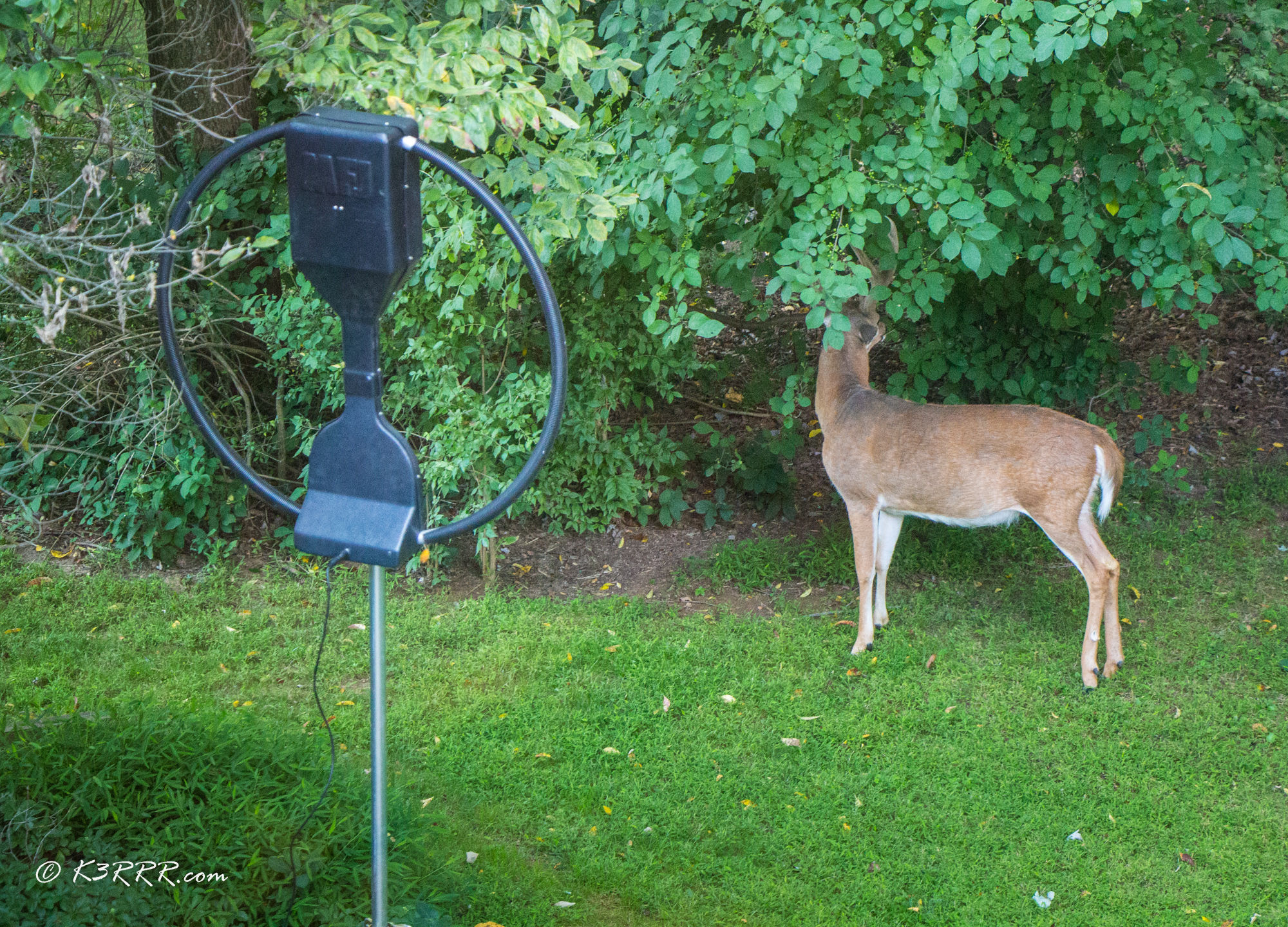 MFJ-1786 Loop Antenna - My Stealth Antenna Installations
